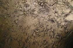 """Штукатурка """"Короед"""" имеет коричневые оттенки, похожие на древесины, с особым рисунком."""